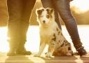 fotografía de mascotas por Alberto Durán